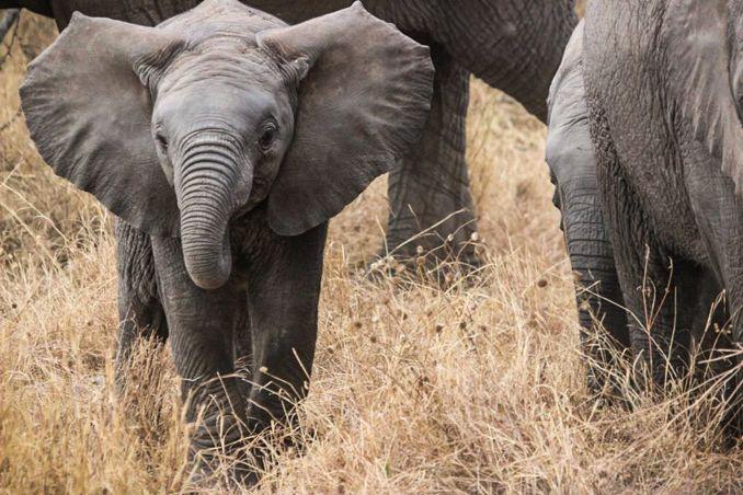 100 cose da fare prima di morire - Eelefante