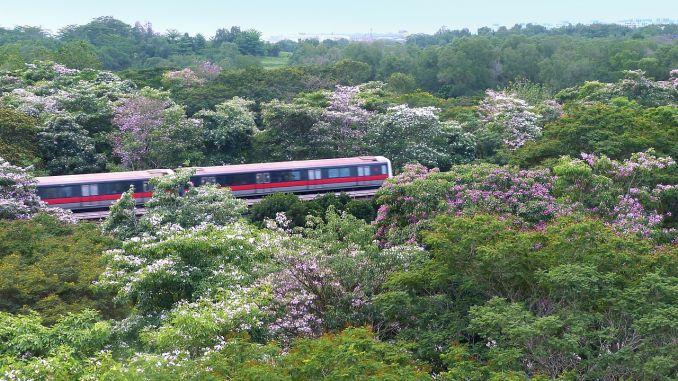 Viaggiare in treno - Treno immerso nella natura