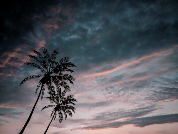 palme tramonto