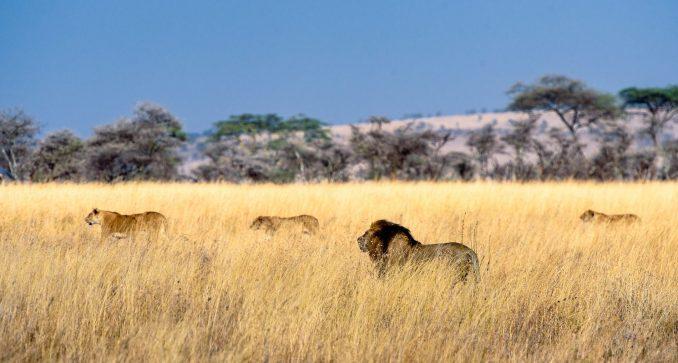 posti da vedere in africa serengeti