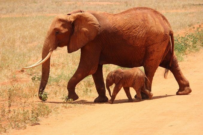 viaggiare da soli mete Kenya