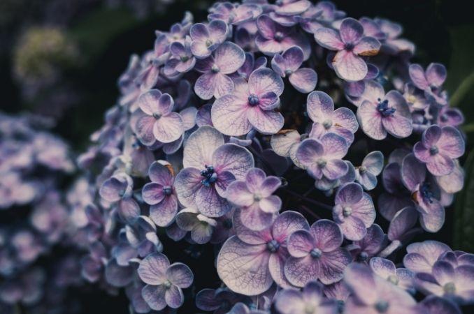 fiori giapponesi 2