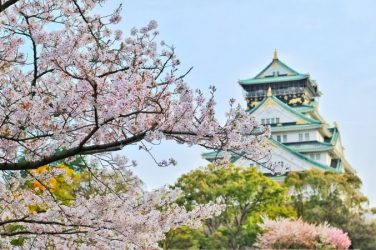 fiori giapponesi giappone