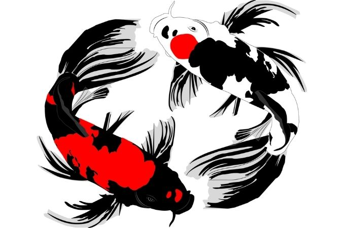 simboli giapponesi carpa